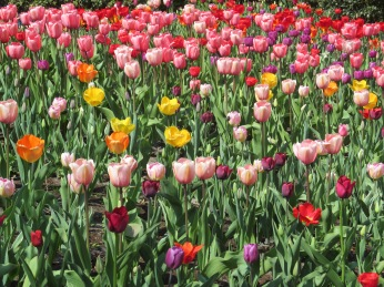 Keukenhof Festival in Holland via MontgomeryFest